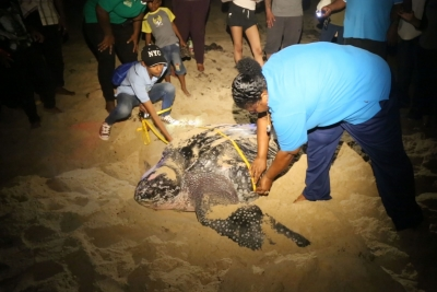 Ms. Lakhan Baptiste (right), with the organization Nature Seekers, gets help measuring a leatherback turtle that has just given birth on Matura Beach. The group has become a model for conservation efforts in the Caribbean region.