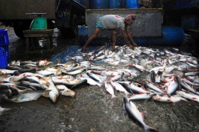A fisheries worker unloading the morning's catch. Photo: UNFAO