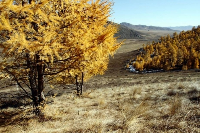 New UN study links trees in drylands with sustainable development